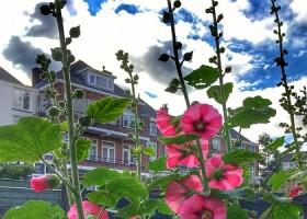 yoga studio elvi den haag archipelbuurt roze bloemen zon wolken Wereld van Yoga