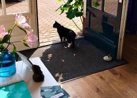yoga studio elvi den haag archipelbuurt voordeur studio kat bloemen zon Wereld van Yoga
